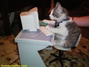 Cat on Compuer